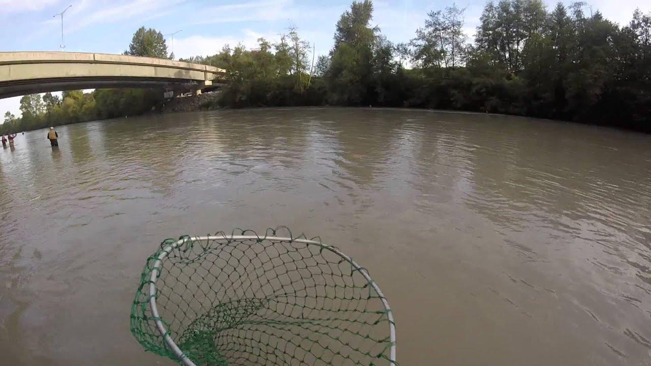 Pink salmon fishing Puyallup River Wa 2015