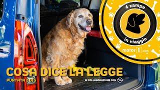 Come trasportare i cani in auto, leggi e divieti