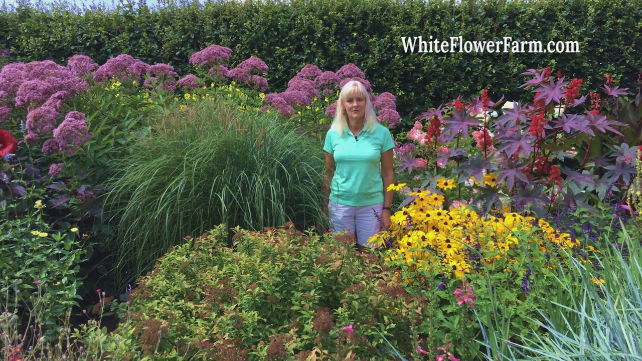 Growing Ornamental Grasses Youtube
