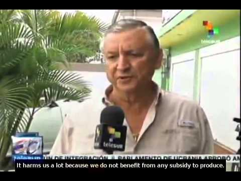 Costa Rica: National rice producers concerned about growing imports