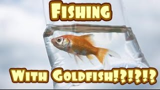 FISHING WITH GOLDFISH?!?!?