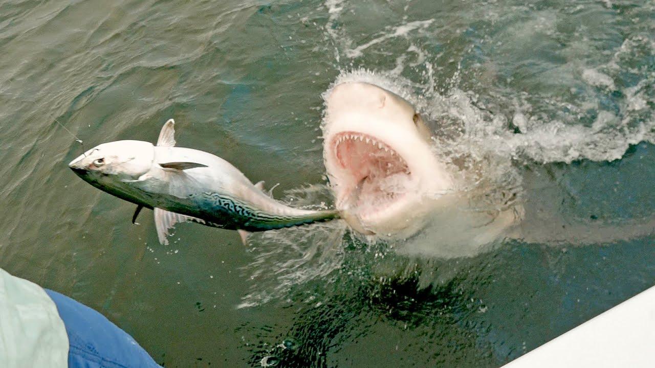 MOST INSANE SHARK CLIPS