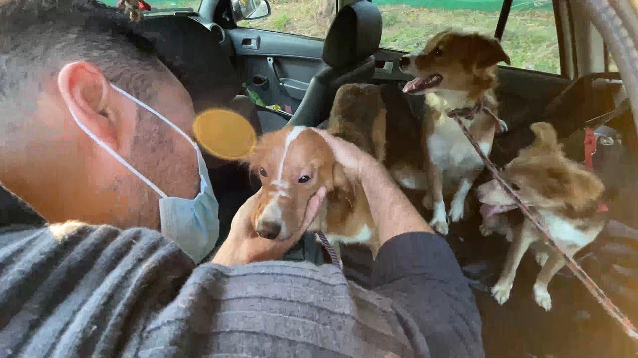 Resgate de Cães - Denúncia de Maus-Tratos