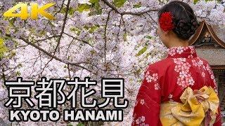 KYOTO HANAMI - LA FIORITURA DEI CILIEGI A KYOTO