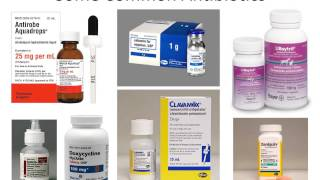 MBC Vet Tech Online Review 4.2 - ROA & Drugs by System Part I