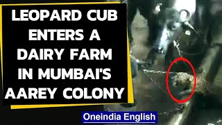 Mumbai: Leopard enters a dairy farm in Aarey colony, watch the video|Oneindia News