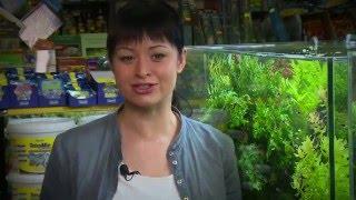 TETRA   dobór i pielęgnacja roślin w akwarium tropikalnym