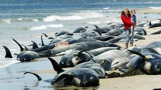 Человек и природа - Океаны!  Документальные фильмы, фильмы о природе