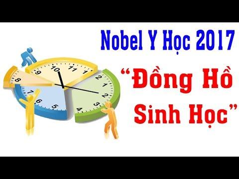 Giải Nobel Y Học 2017 đã thuộc về Nghiên cứu Đồng Hồ Sinh Học
