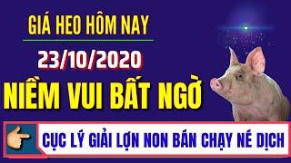 Giá heo hơi hôm nay ngày 23/10/2020   Lý giải lợn non bán chạy né DTLCP   Niềm vui giá lợn hơi tăng