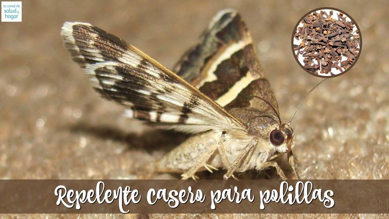 Como eliminar las polillas de la madera excellent las polillas y los algavaros son insectos que - Como eliminar la polilla de la madera ...