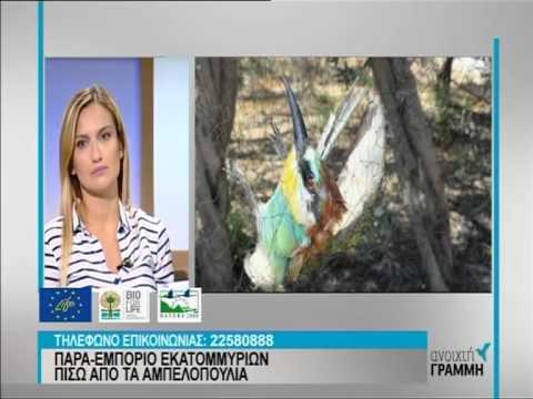 Οι διαστάσεις της παράνομης παγίδευσης άγριων πτηνών στην Κύπρο - Μέρος Α