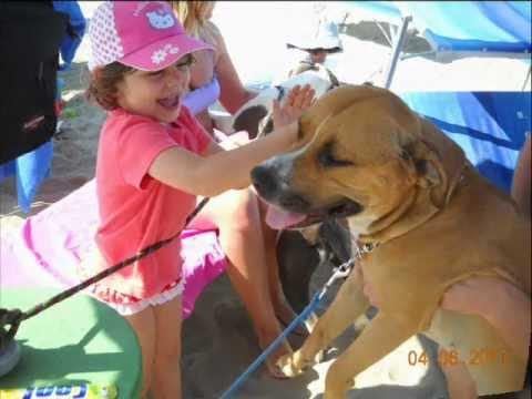Spiaggia cani rimini vacanze con animali al bagno egisto 38 youtube - Bagno 38 rimini ...