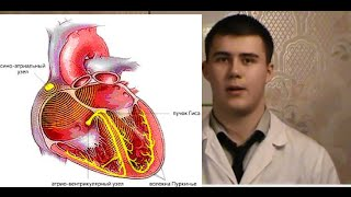 видео Нормальная физиология