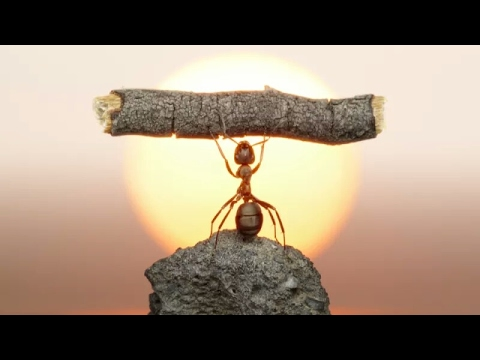 10# Interesting fun Facts about Ants!!!