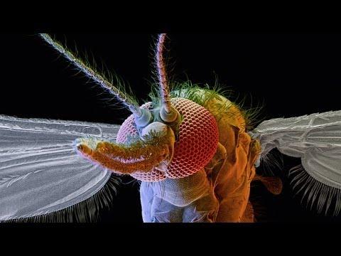 Mosquito Week