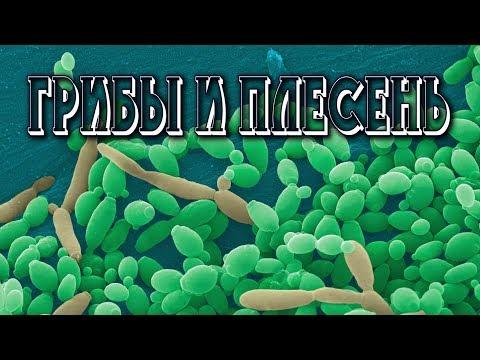 Как вывести грибы из организма человека