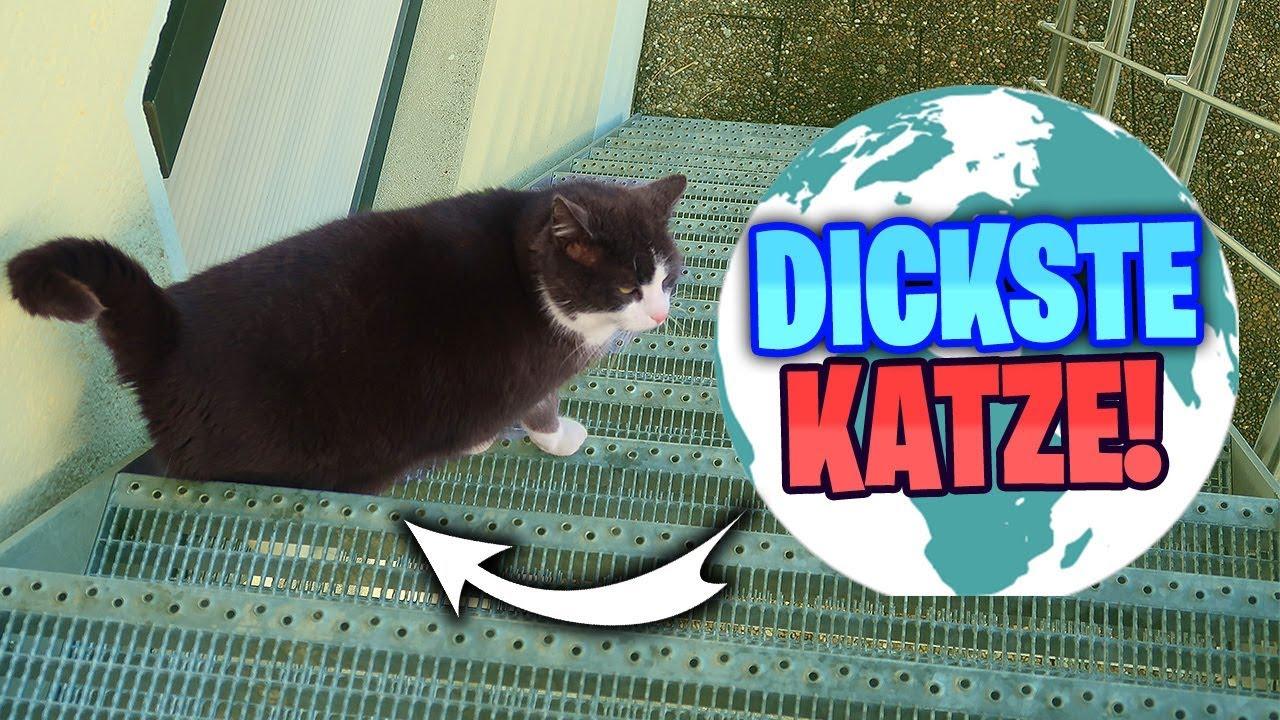 Die Dickste Katze Der Welt Cmc Youtube