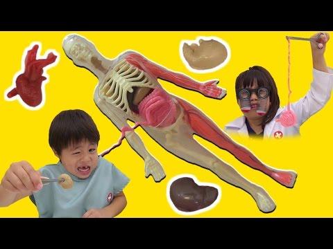 スクイーズ 人体模型くん 解剖して体のお勉強をしたよ こうくんねみちゃん