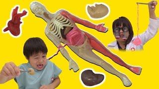 スクイーズ 人体模型くん 解剖して体のお勉強をしたよ こうくんねみちゃん thumbnail