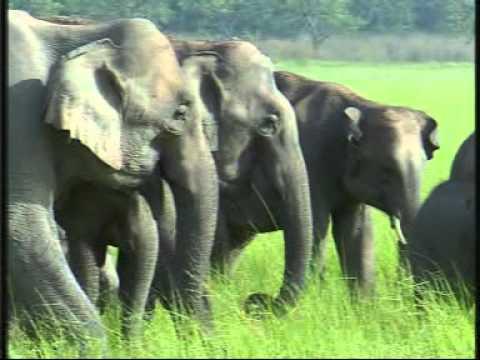 Gajraj - Documentary on Asian Elephants