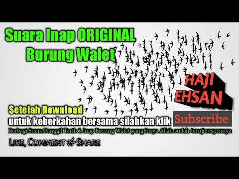 suara-inap-original-burung-walet-high-quality-sound