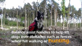 Trail Dogs Wearing Ruff Wear Trail Packs On The 7 Stanes Mountain Bike Trails