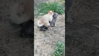 Говорили, что не бывает дружбы между кошкой и собакой... А любви???