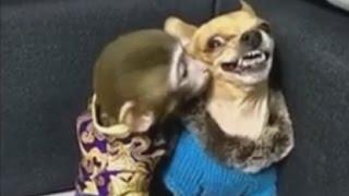 [кеХто приколы] Смешные собаки | Подборка приколов февраль 2017