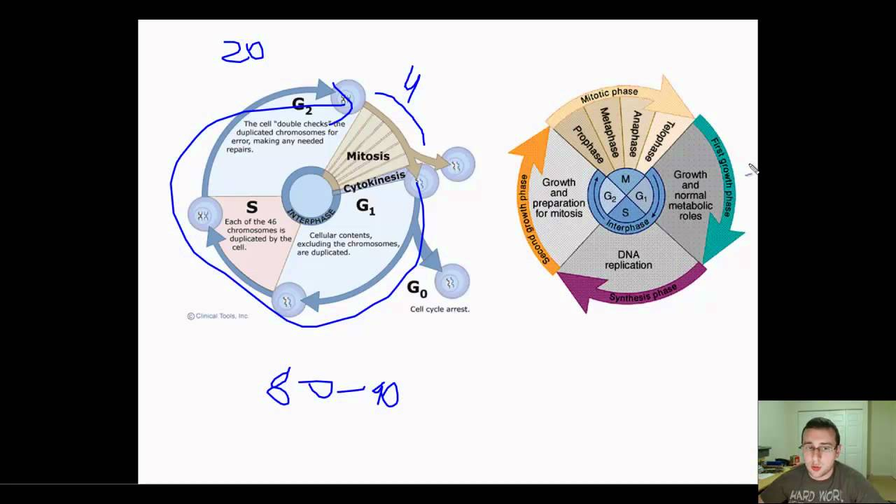 Prokaryotic Binary Fission Vs Eukaryotic Cell Cycle Youtube Cells Diagram Below Learn About