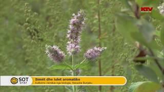 Bimet dhe lulet aromatike