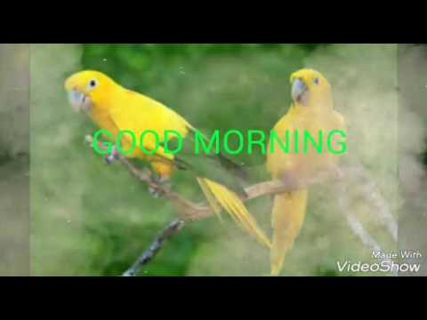 Good Morning Wishes in Odia
