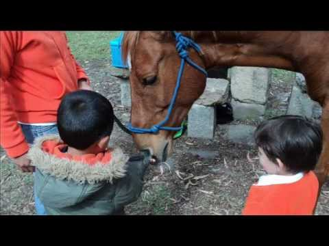 Horse Guided Empowerment - a suggestion for equine ...