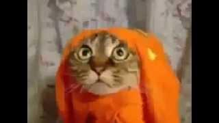 любителям кошек Юмор! Прикол! Смех