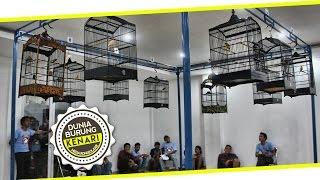 DUNIA HOBI : Canary Battle Exhibition - Adu Kenari Gacor Ngedur Di Pondok Cabe Udik
