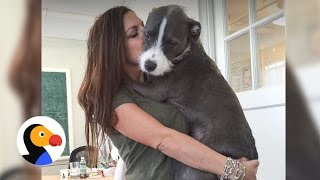 Pit Bull Loves To Hug His Family | The Dodo