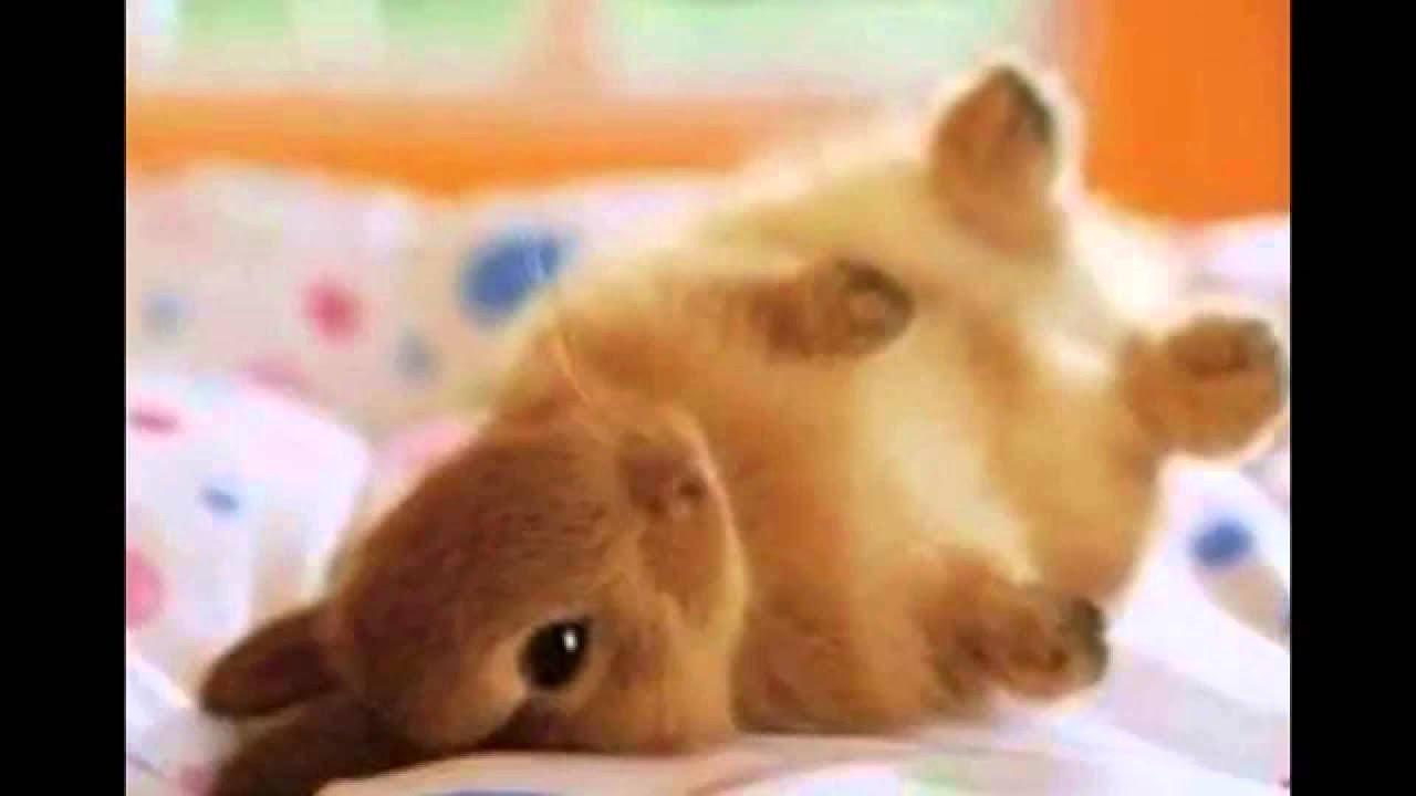 Favoritos top 10 animais mais fofos do mundo - YouTube QH82