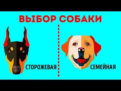 Как выбрать собаку для себя