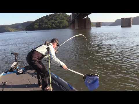 How To | Crankbait Bridges | Steve Morgan Australian BREAM Open Highlights Day 2 -  Hawkesbury