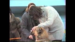 Выставка собак, 1995 год