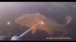 Классная рыбалка и подводная охота на карпа