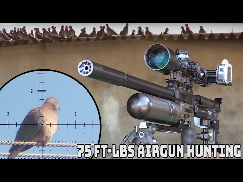 75 ft-lbs Airgun Hunting – Pest Control