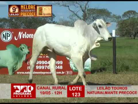 LOTE 123