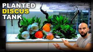 Aquascape Tutorial: HUGE XL Discus Islands Fish Tank (How To: Planted Aquarium Step By Step Guide)