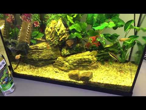 Blind Cave Fish