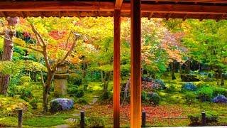 圓光寺 京都 / Enko-ji Temple Kyoto  / 히가시야마 구 교토