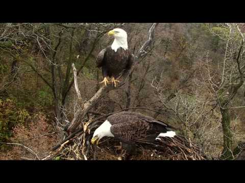 The Eagle's Return: A Visit to the National Eagle Center