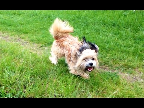 Dog running away – Dog running slow motion