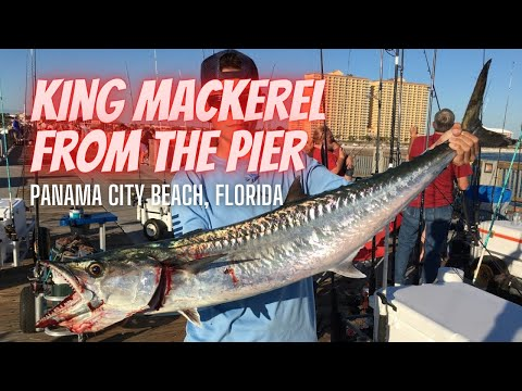 Panama City Beach Pier Fishing At Russell-Fields City Pier - 24 Pound King Mackerel