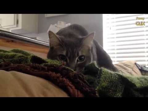 Cats Being Jerks Compilation NEW